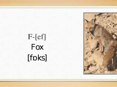 F-[ef] Fox [fɒks]