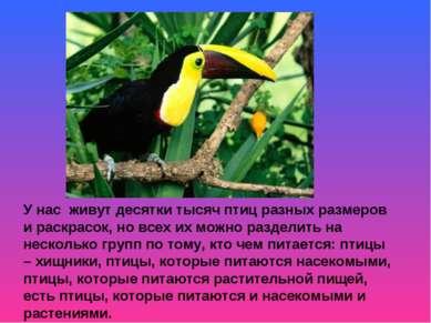 У нас живут десятки тысяч птиц разных размеров и раскрасок, но всех их можно ...
