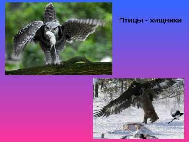 Птицы - хищники