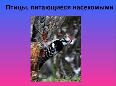 Птицы, питающиеся насекомыми
