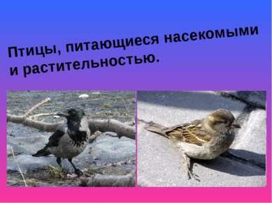 Птицы, питающиеся насекомыми и растительностью.