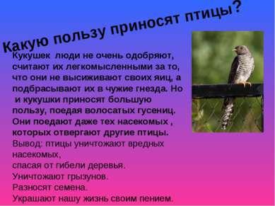 Какую пользу приносят птицы? Кукушек люди не очень одобряют, считают их легко...
