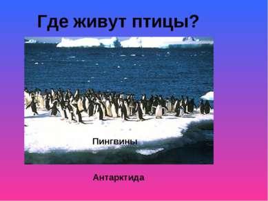 Где живут птицы? Хвост Антарктида Пингвины