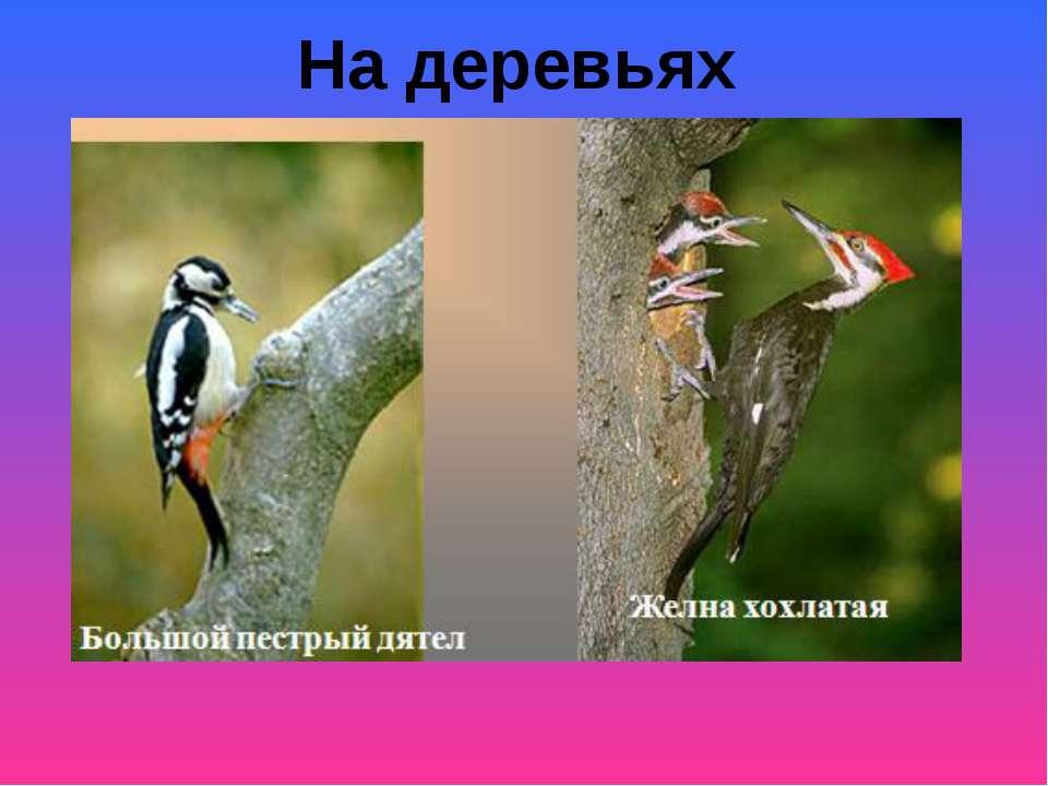 На деревьях