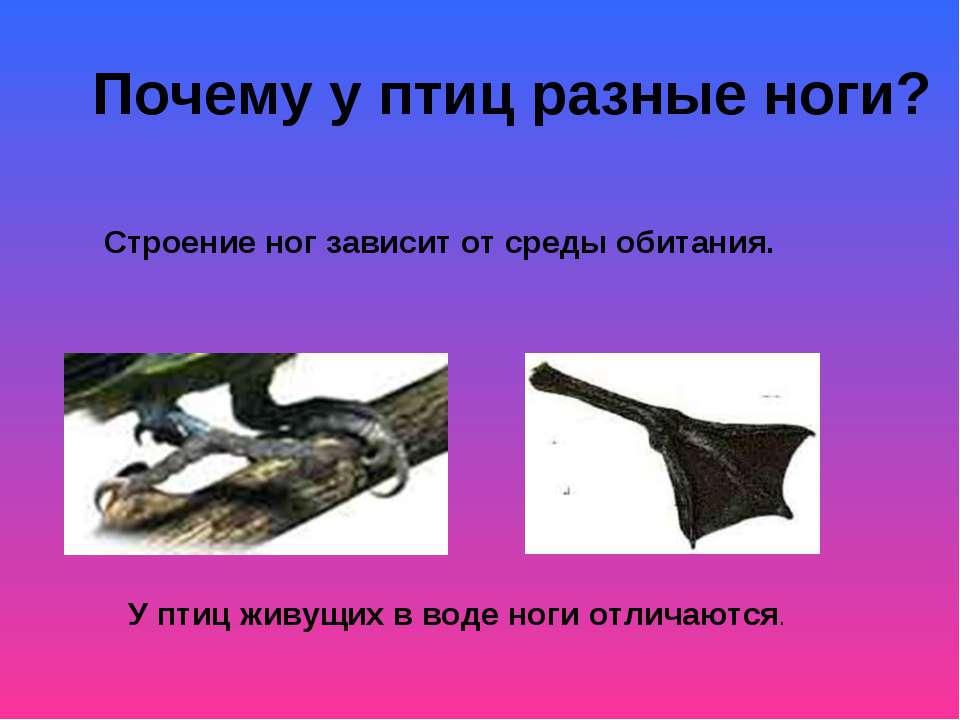 Почему у птиц разные ноги? Строение ног зависит от среды обитания. У птиц жив...