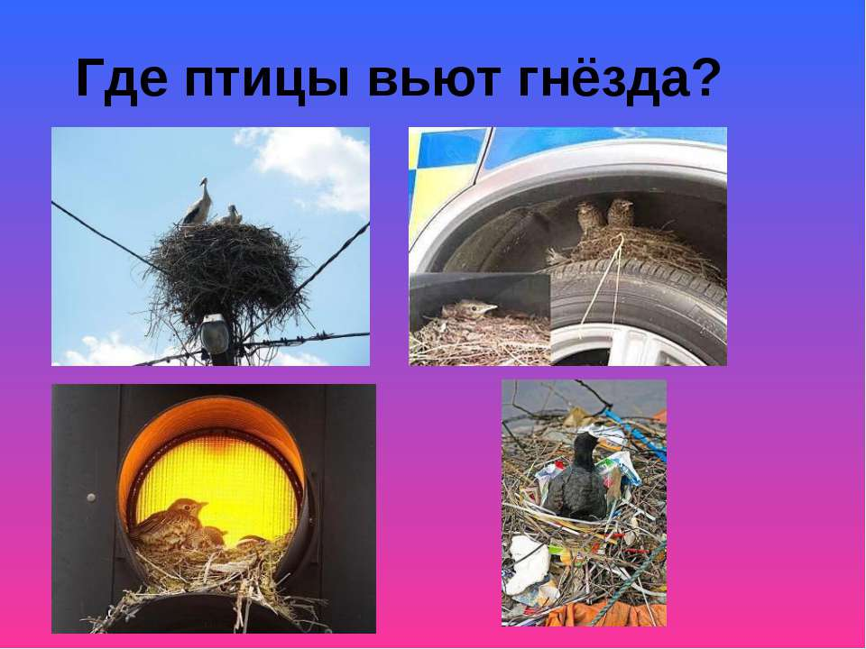 Где птицы вьют гнёзда?