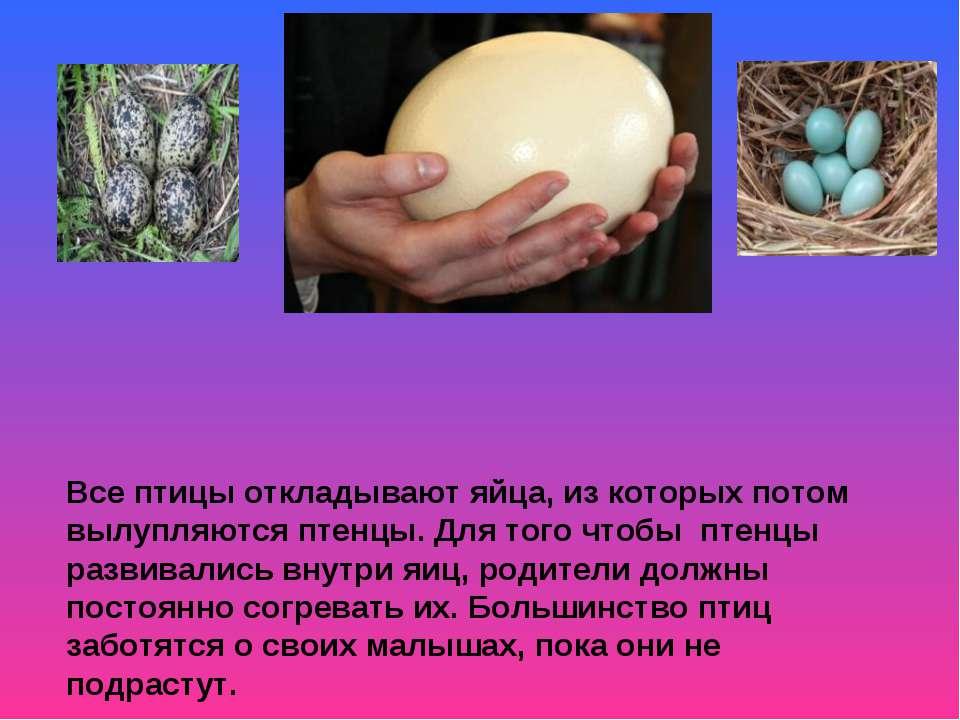 Все птицы откладывают яйца, из которых потом вылупляются птенцы. Для того что...