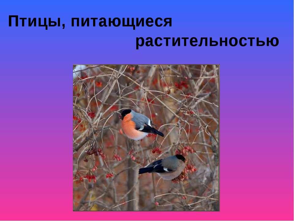 Птицы, питающиеся растительностью