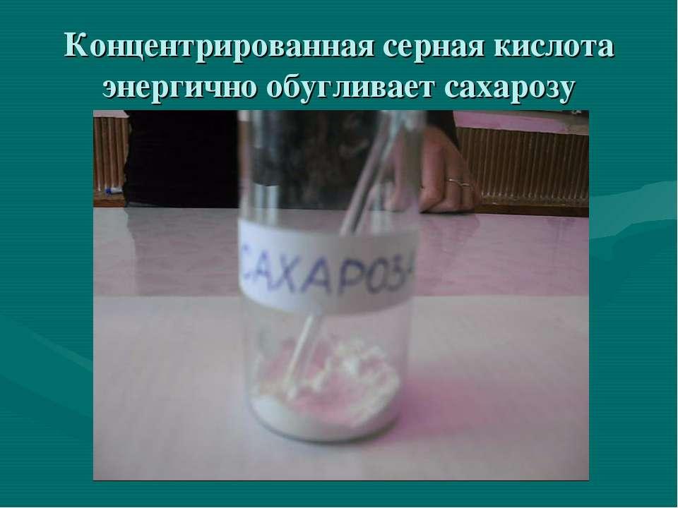 Концентрированная серная кислота энергично обугливает сахарозу