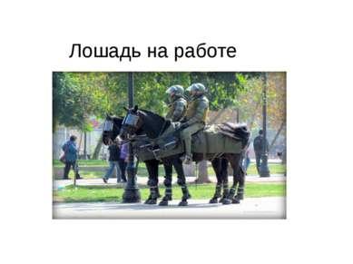 Лошадь на работе