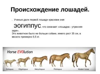 Происхождение лошадей. . Ученые дали первой лошади красивое имя эогиппус, что...