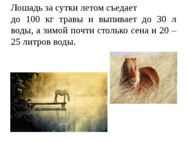 Лошадь за сутки летом съедает до 100 кг травы и выпивает до 30 л воды, а зимо...
