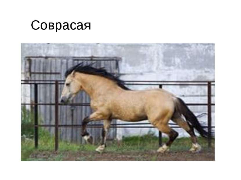 Соврасая