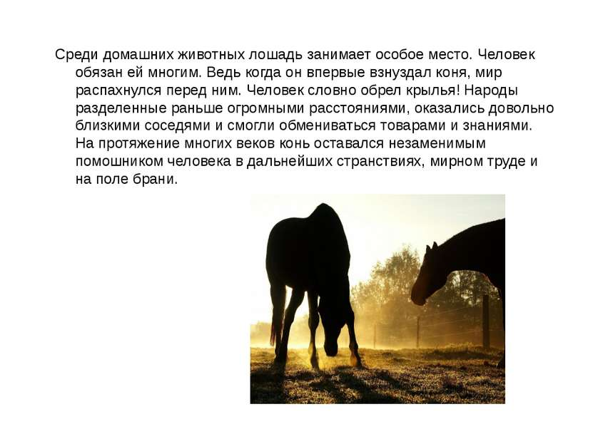 Среди домашних животных лошадь занимает особое место. Человек обязан ей многи...