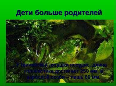 Дети больше родителей У гвинейской лягушки псеудис, длина головастика достига...