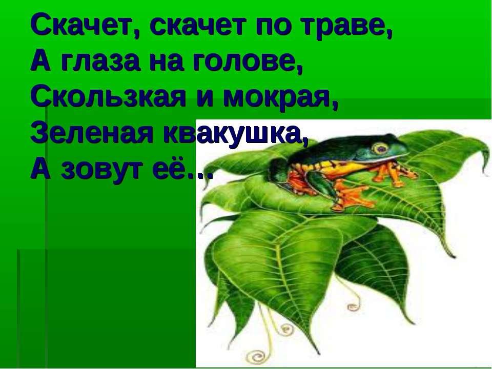 Скачет, скачет по траве, А глаза на голове, Скользкая и мокрая, Зеленая кваку...