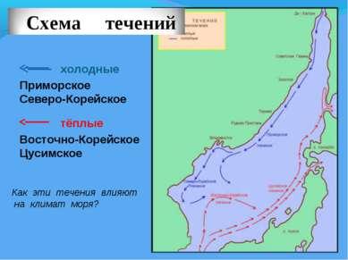 холодные тёплые Приморское Северо-Корейское Восточно-Корейское Цусимское Как ...