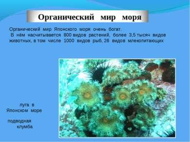 Органический мир Японского моря очень богат. В нём насчитывается 800 видов ра...