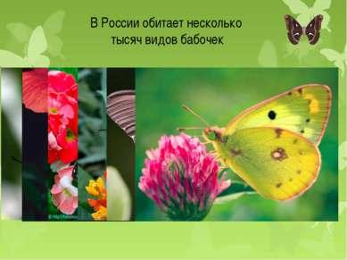 В России обитает несколько тысяч видов бабочек