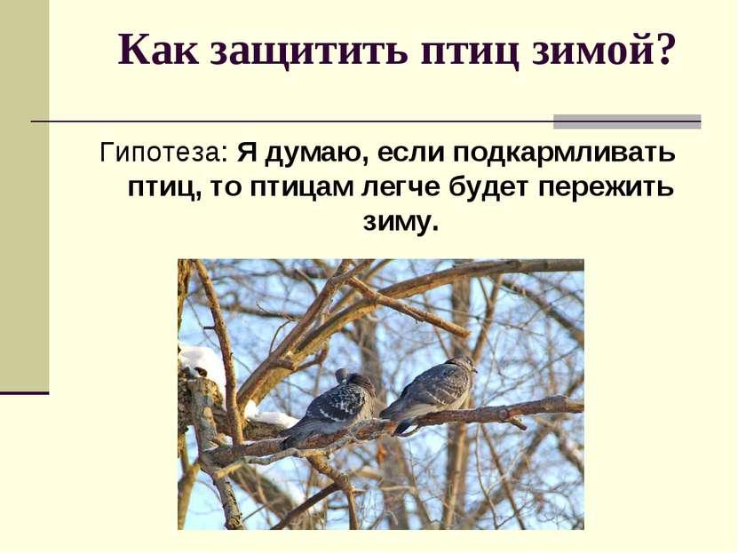 Как защитить птиц зимой? Гипотеза: Я думаю, если подкармливать птиц, то птица...