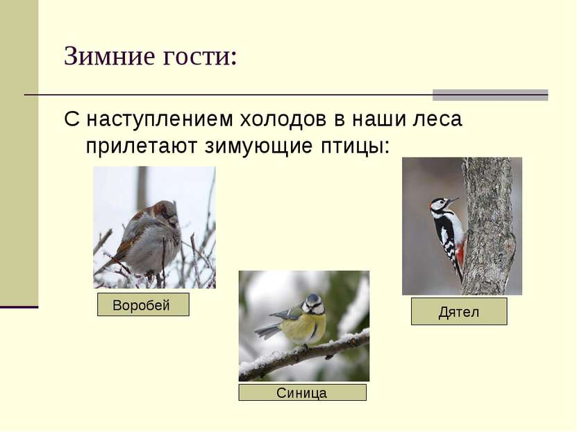 Зимние гости: С наступлением холодов в наши леса прилетают зимующие птицы: Во...