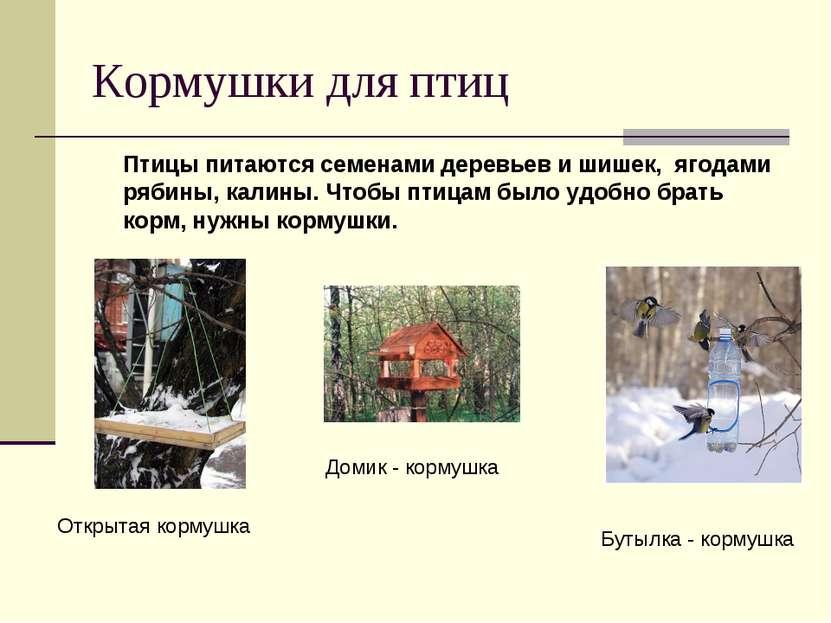 Кормушки для птиц Птицы питаются семенами деревьев и шишек, ягодами рябины, к...