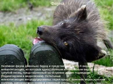 Фауна Наземная фауна довольно бедна и представлена всего 6 видами млекопитающ...