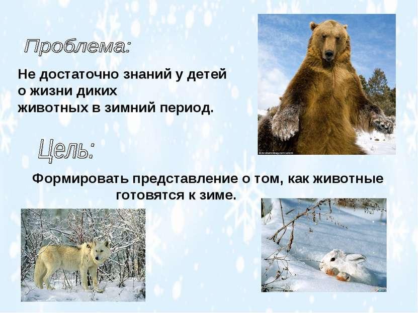 Не достаточно знаний у детей о жизни диких животных в зимний период. Формиров...