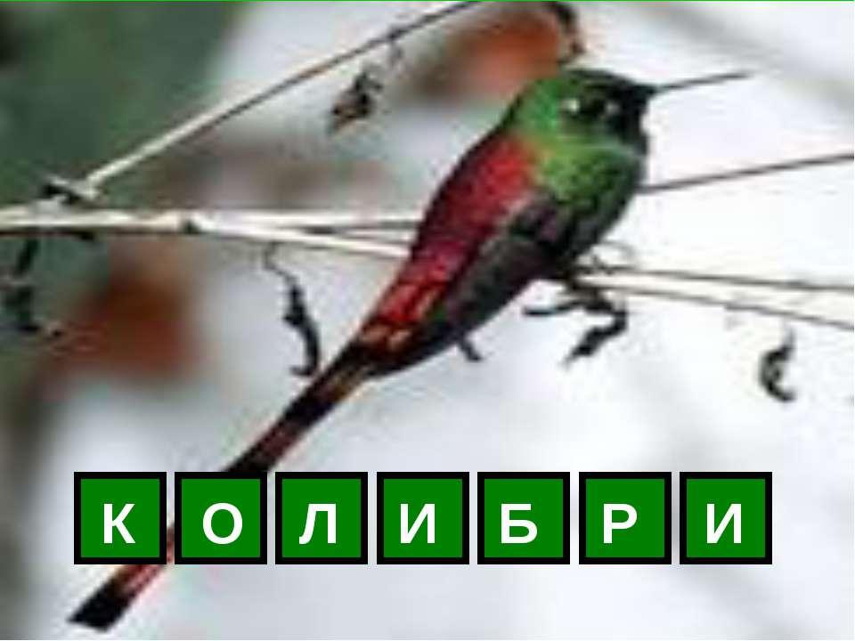К О Л И Б Р И