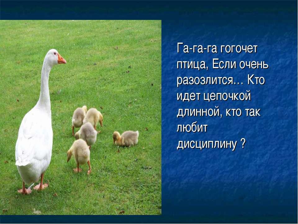 Га-га-га гогочет птица, Если очень разозлится… Кто идет цепочкой длинной, кто...