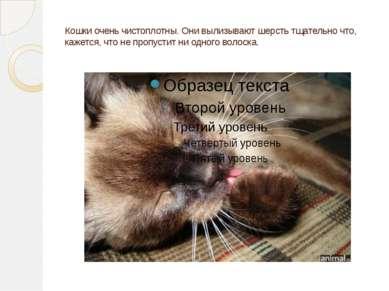 Кошки очень чистоплотны. Они вылизывают шерсть тщательно что, кажется, что не...