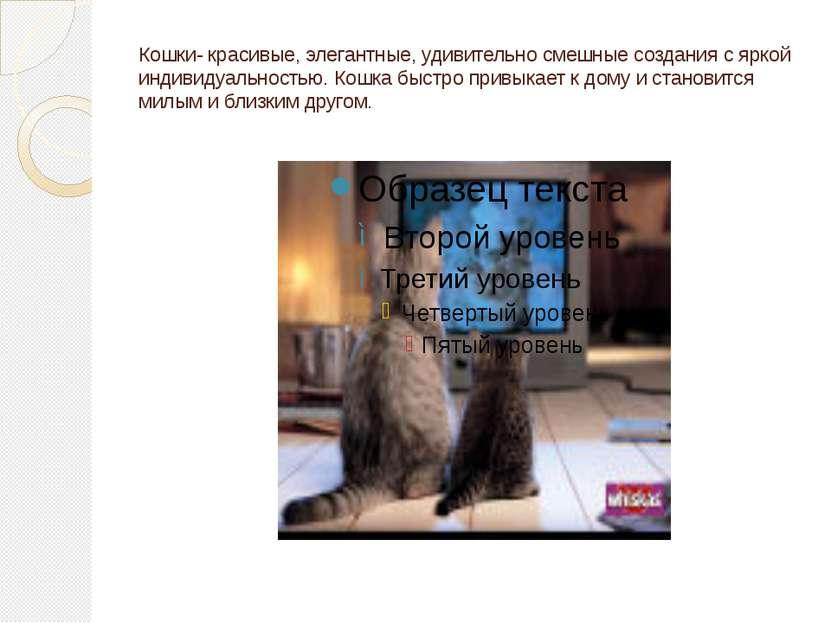 Кошки- красивые, элегантные, удивительно смешные создания с яркой индивидуаль...