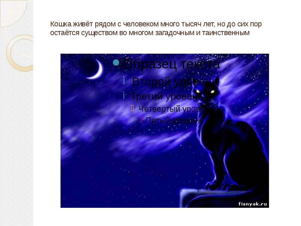 Кошка живёт рядом с человеком много тысяч лет, но до сих пор остаётся существ...