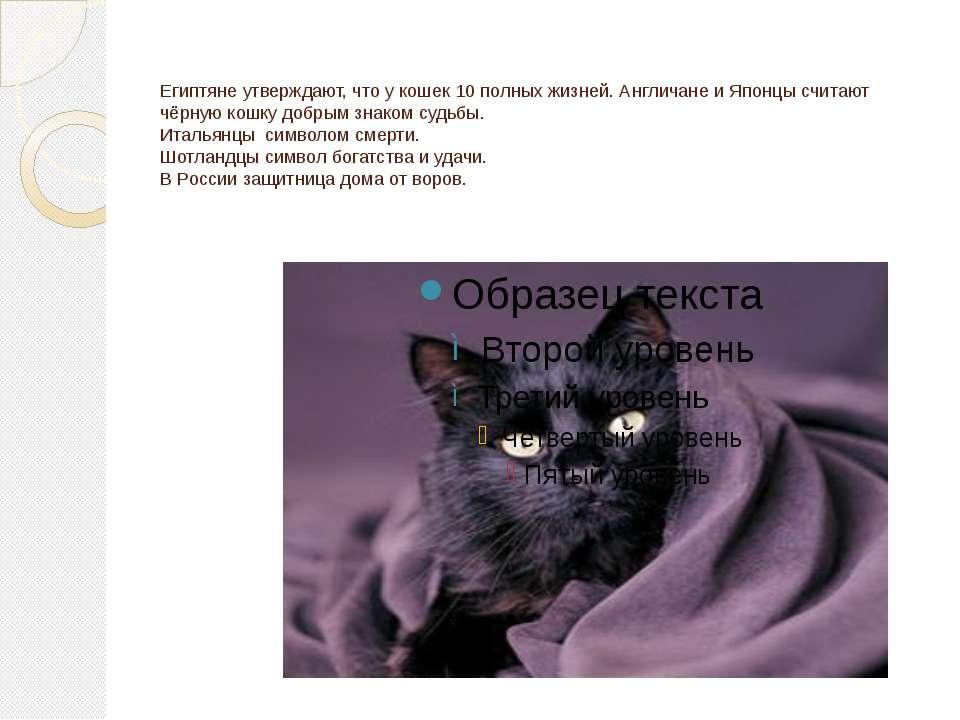 Египтяне утверждают, что у кошек 10 полных жизней. Англичане и Японцы считают...