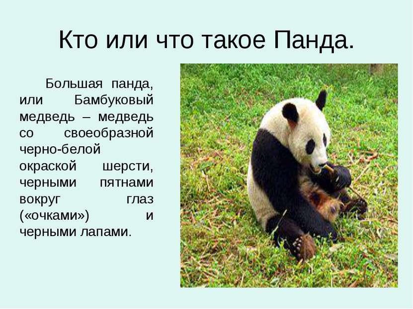 Кто или что такое Панда. Большая панда, или Бамбуковый медведь – медведь со с...