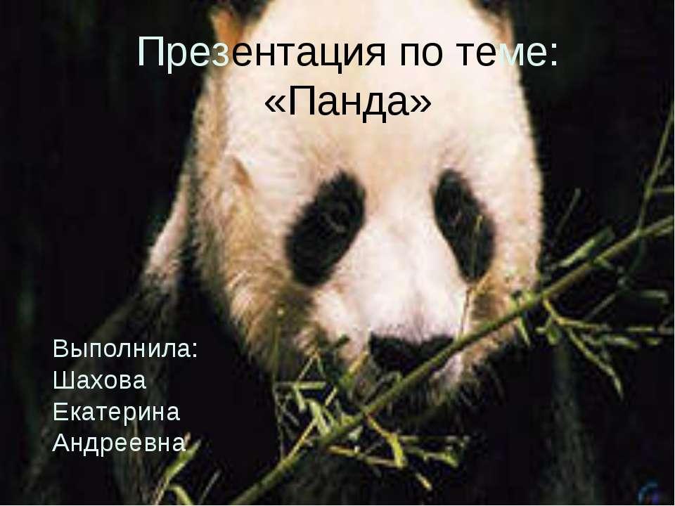 Презентация по теме: «Панда» Выполнила: Шахова Екатерина Андреевна