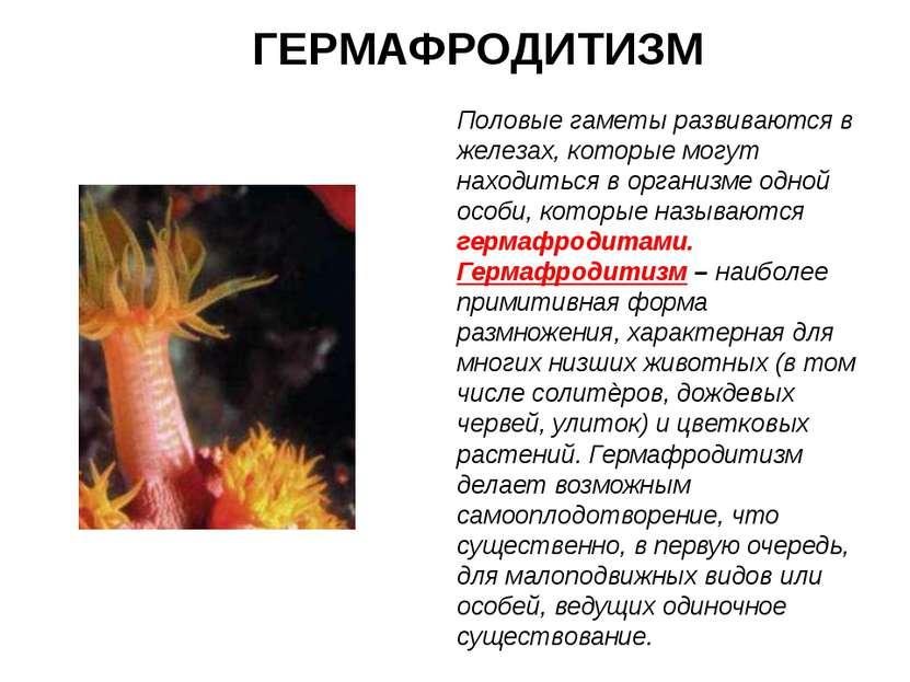 ГЕРМАФРОДИТИЗМ Половые гаметы развиваются в железах, которые могут находиться...