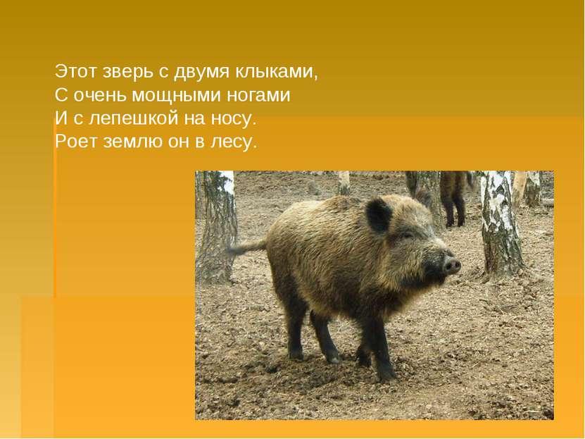 Этот зверь с двумя клыками, С очень мощными ногами И с лепешкой на носу. Ро...