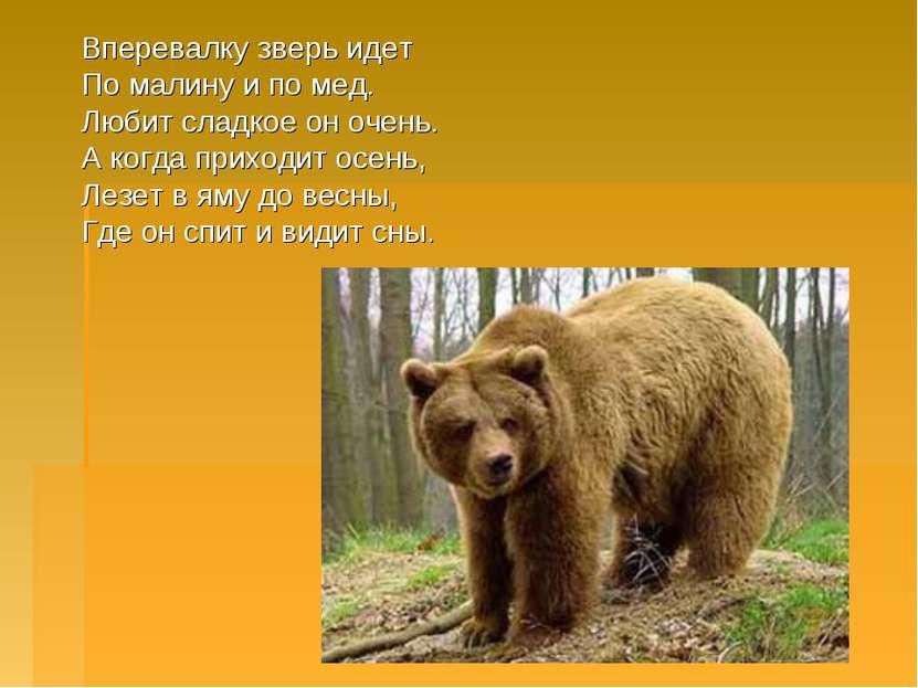 Вперевалку зверь идет По малину и по мед. Любит сладкое он очень. А когда при...