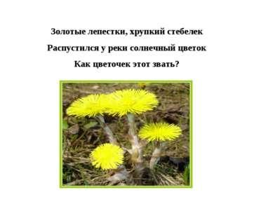 Золотые лепестки, хрупкий стебелек Распустился у реки солнечный цветок Как цв...