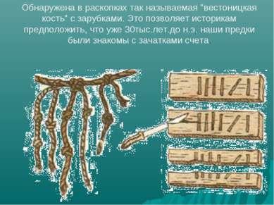 """Обнаружена в раскопках так называемая """"вестоницкая кость"""" с зарубками. Это по..."""