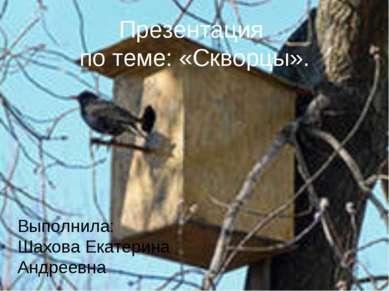 Презентация по теме: «Скворцы». Выполнила: Шахова Екатерина Андреевна