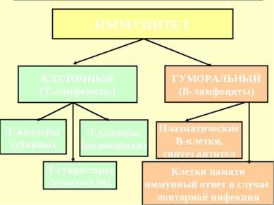 ИММУНИТЕТ КЛЕТОЧНЫЙ (Т-лимфоциты) ГУМОРАЛЬНЫЙ (В-лимфоциты) Т-киллеры (убийцы...