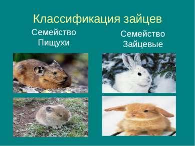 Классификация зайцев Семейство Пищухи Семейство Зайцевые