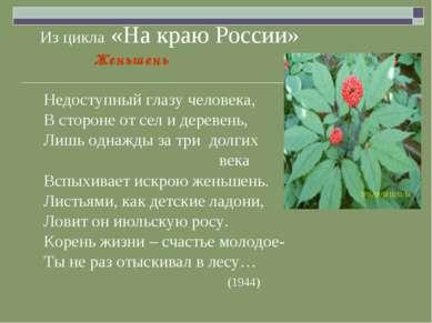 Из цикла «На краю России» Женьшень Недоступный глазу человека, В стороне от с...