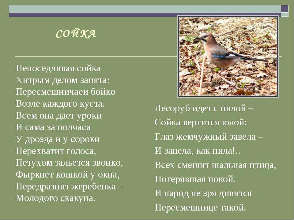 СОЙКА Непоседливая сойка Хитрым делом занята: Пересмешничаеи бойко Возле кажд...