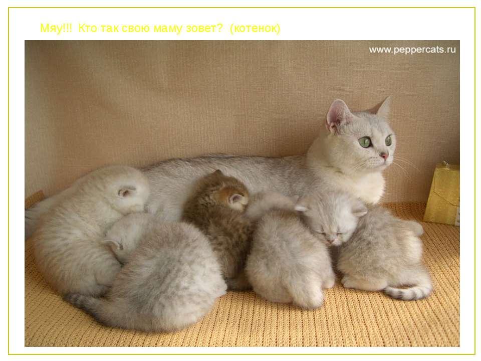 Мяу!!! Кто так свою маму зовет? (котенок)