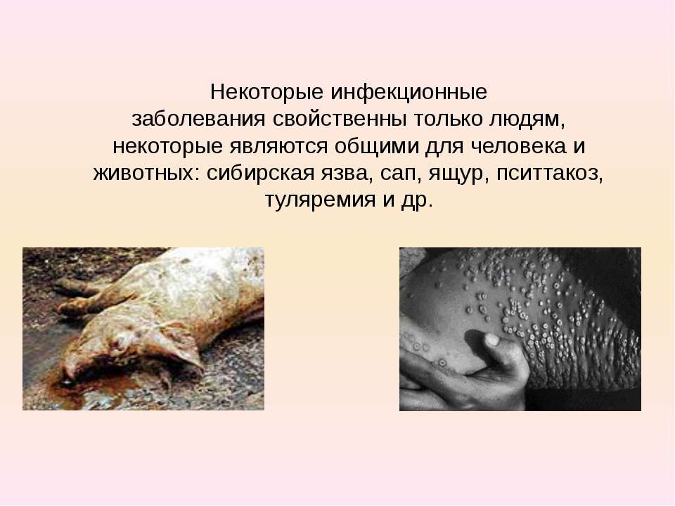 Некоторые инфекционные заболеваниясвойственны только людям, некоторые являют...