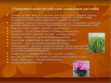 Оздоровительное воздействие комнатных растений Хвойные растения, фикусы, пела...