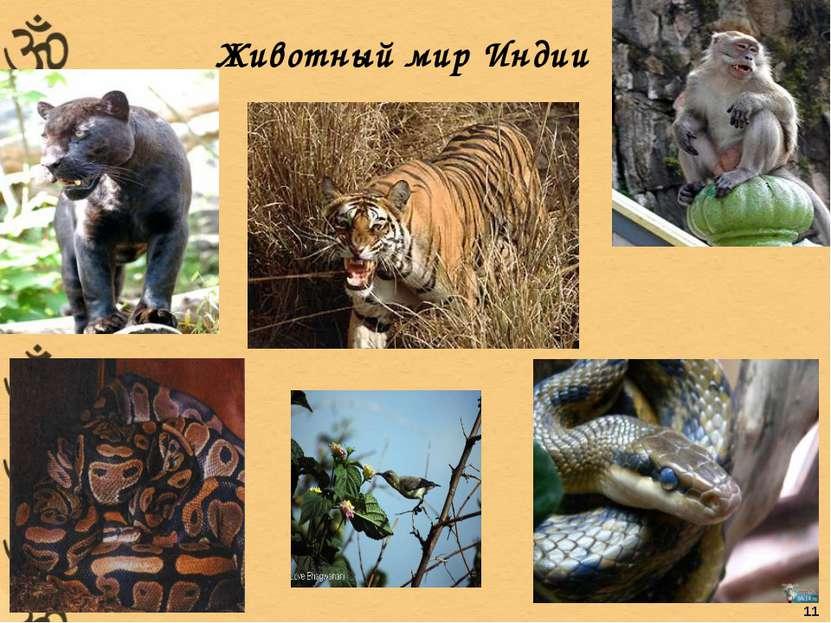 Животный мир Индии 11